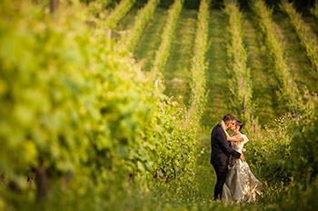 bride and groom in a vineyard